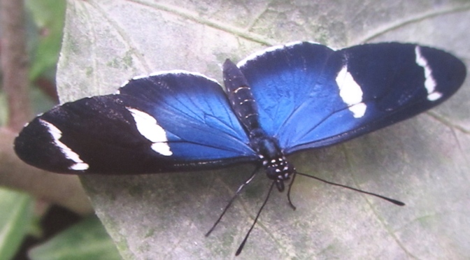 Mindo's butterfly farm