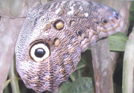 Mindo butterfly farm
