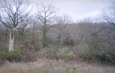 Kapok trees - south of Cruicita
