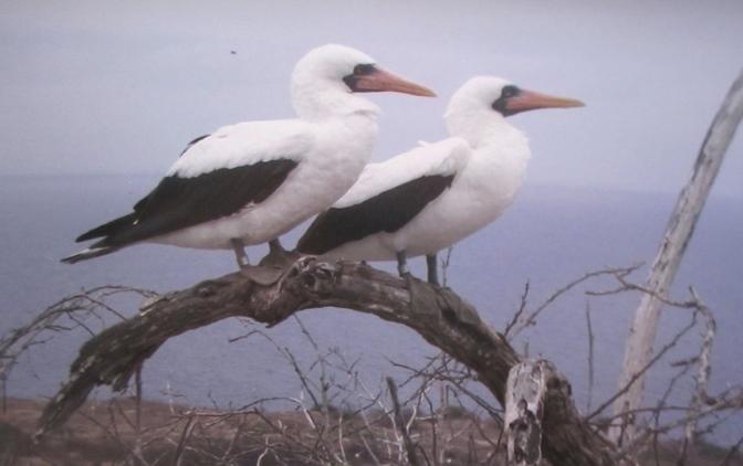 Ecuador's protected island – Isla de la Plata