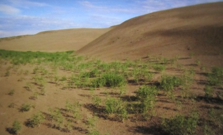 The Great Sand Hills, Saskathewan