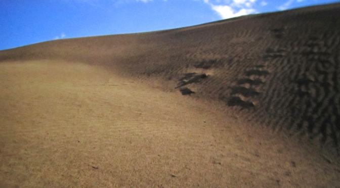 Sand hills in the middle of Canada?