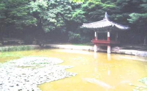 Lily pond, Changdeokgung Palace