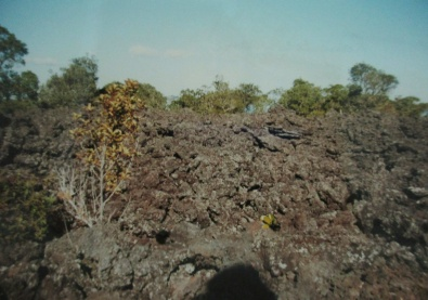 Rangitoto Island Reserve lava rocks