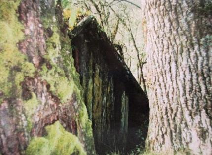 Old whare, Buried Village, Rotorua