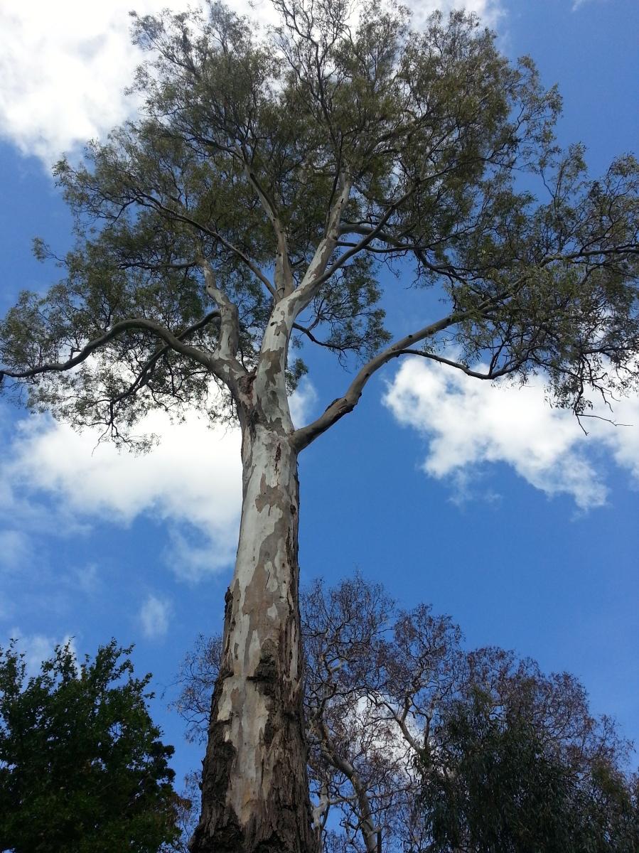Melbourne's Royal Botanic Gardens