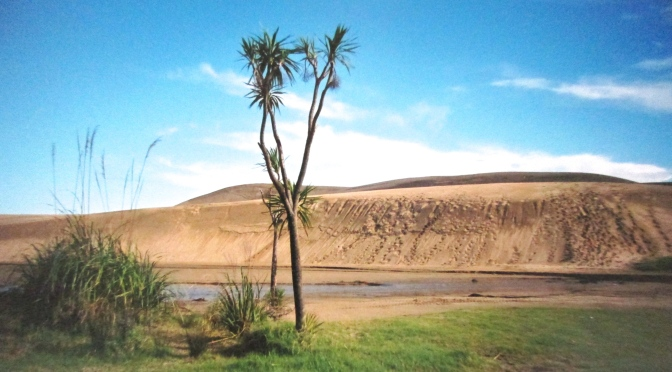 The north island's sand dunes