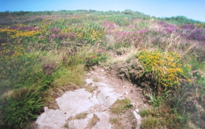 Wildflowers along the Howth trail, Dublin Bay