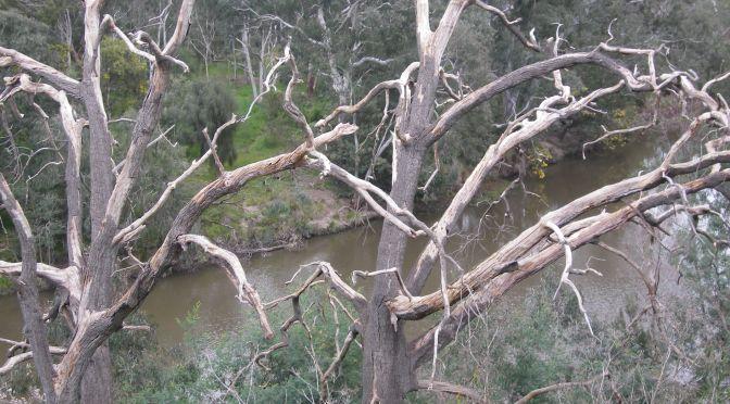 Melbourne's Yarra Bend