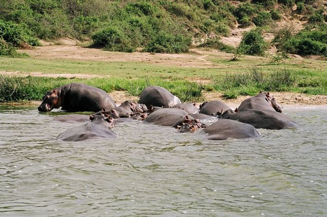 Uganda's Queen Elizabeth Game Park