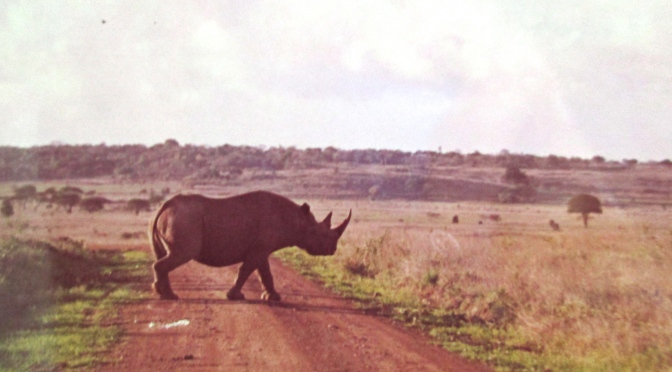 A race from a rhino