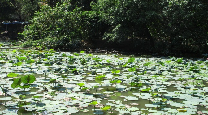 Ho Chi Minh City's Botanic Gardens