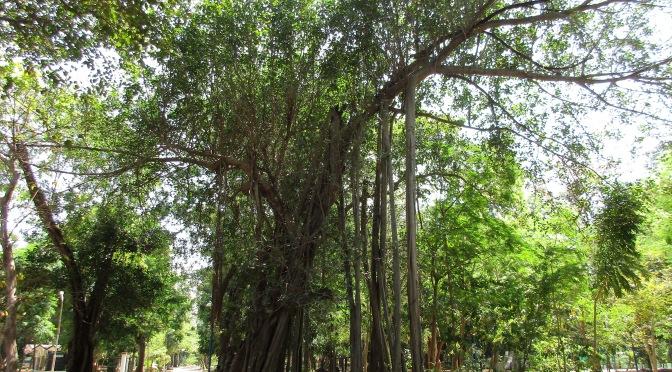 Puducherry's Botanic Gardens