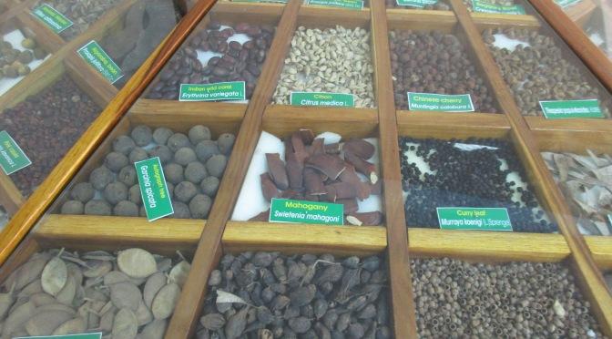 Puducherry's ancient fossil