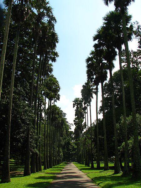 450px-Sri_Lanka_-_032_-_Kandy_Botanical_Garden_(1756374255)