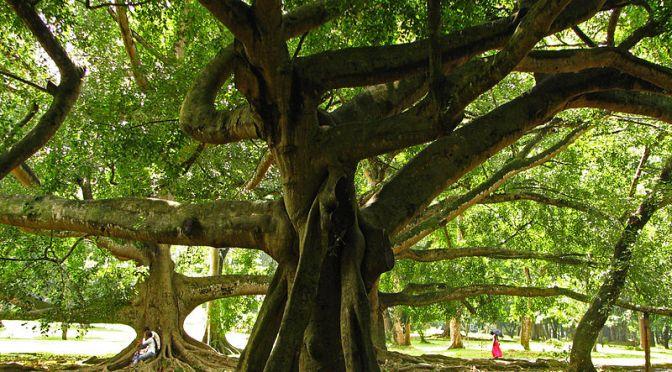 Kandy's Botanic Gardens