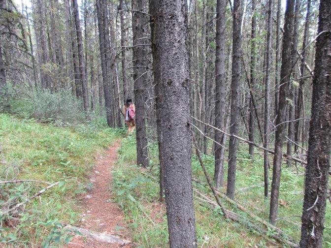 Troll Falls Trails