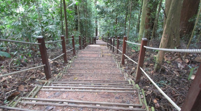 Hiking Trail to Bukit Timah's Summit