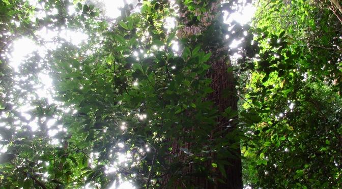 Bukit Timah's Catchment Trail