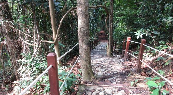 Bukit Timah's Cave Trail