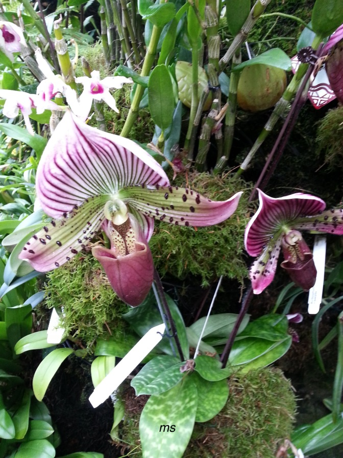 Orchids, Orchids and more Orchids