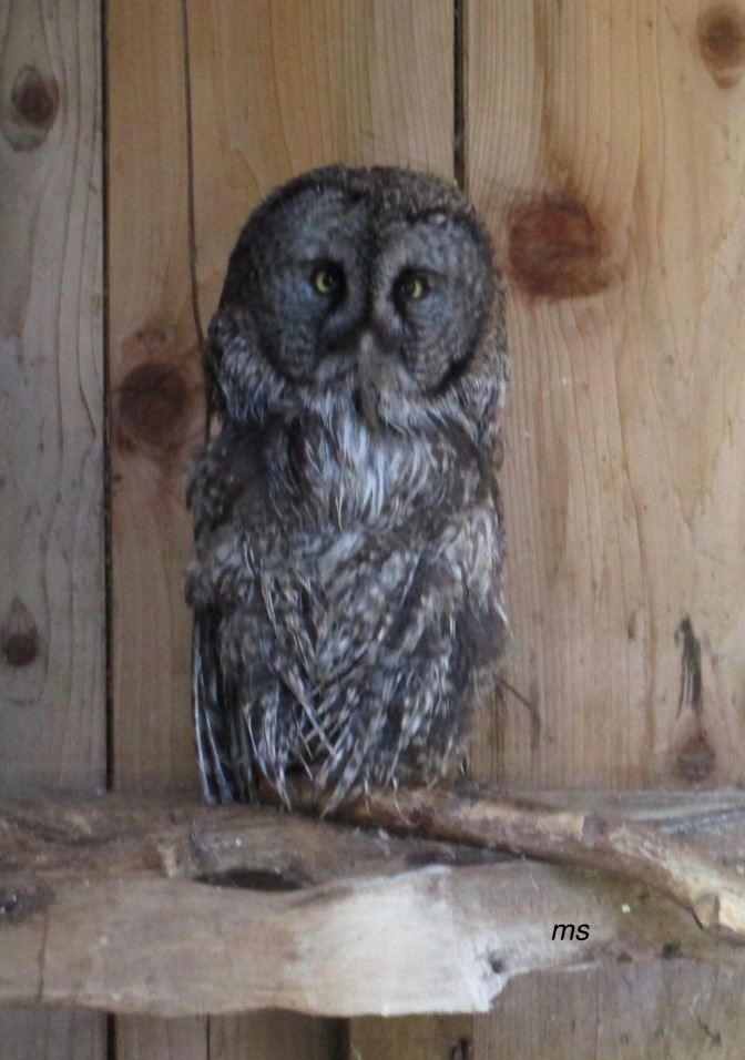 Vancouver Island's Wildlife Recovery Centre