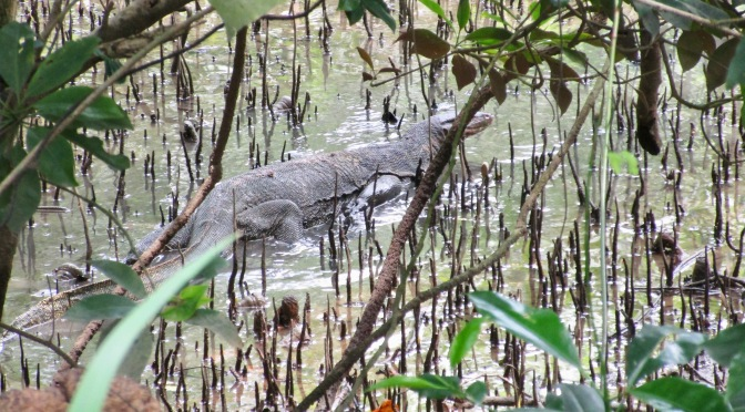 Creatures of Sungei Buloh Wetlands