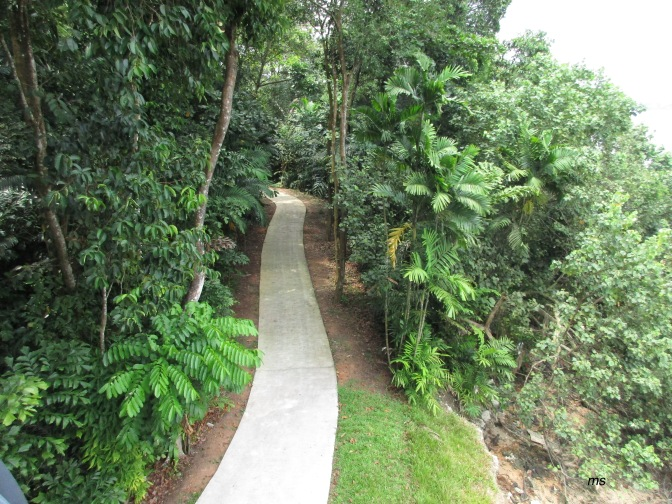 Sungei Buloh Wetlands' Coastal Trail