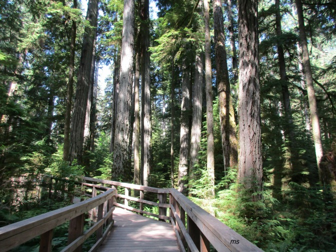 Vancouver Island's Cathedral Grove