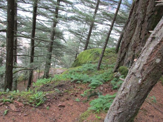 Sandy Cove trail