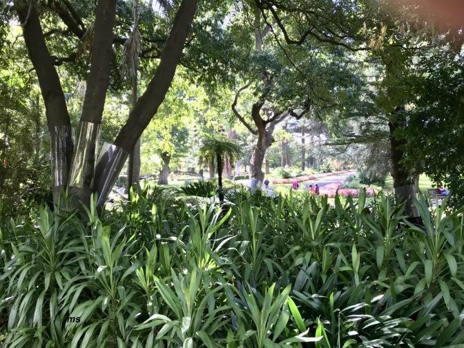 A lush Melbourne park