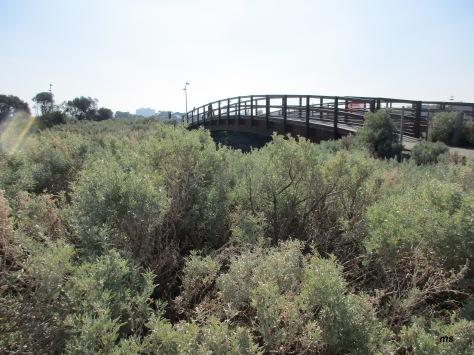 Elwood Canal bridge, Bay Trail