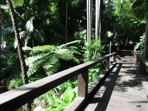 Rainforest walk, Southbank