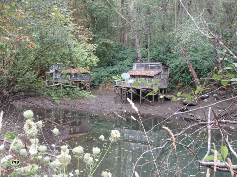 Squaters' Cabins, Maplewood