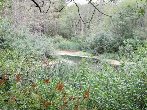 Maplewood Flats Wild Bird Sanctuary