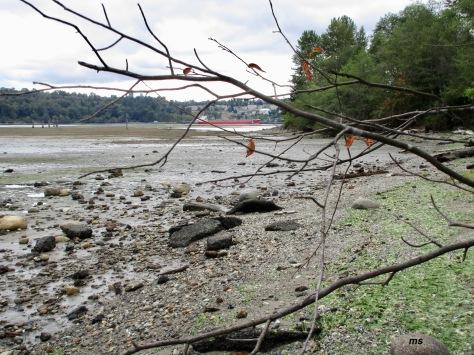 North Shore mudflats, Maplewood