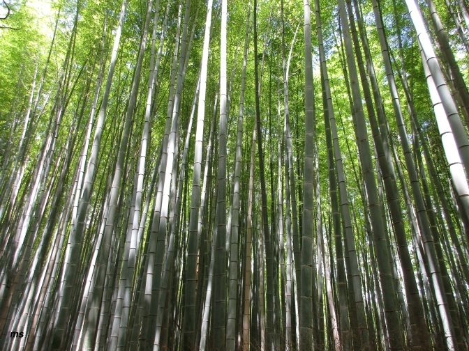 What was it about the Bamboo Forest?
