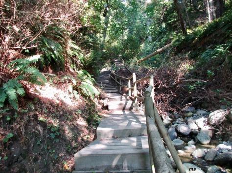 Leaving Pacific Spirit Regional Park