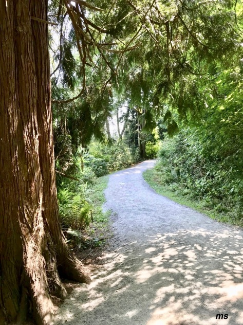 Burnaby Lake trail