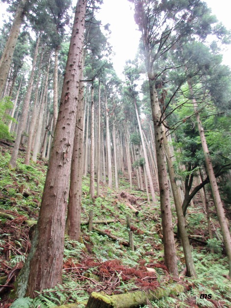 Kibune forest, North Kyoto