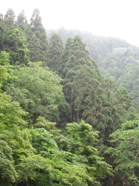 Kibune forest, north  of Kyoto