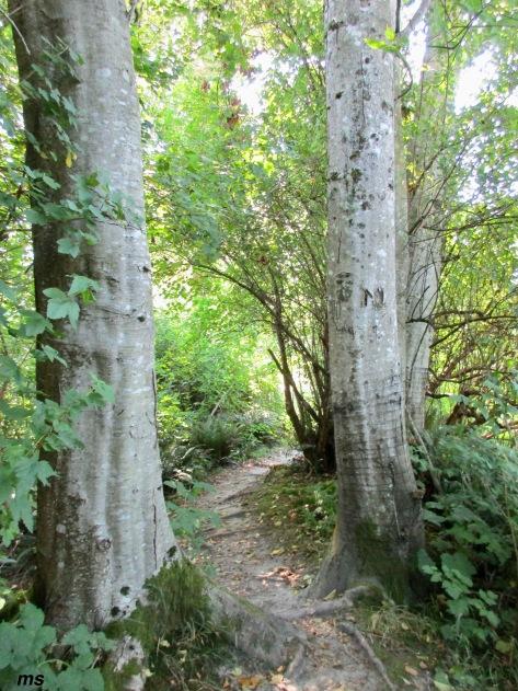 Pitt-Addiington Marsh, Pitt Polder Ecological reserve
