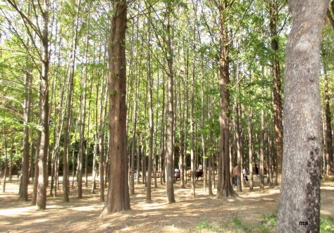 Eco forest, Seoul Forest