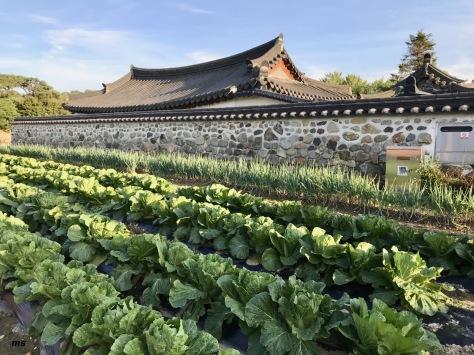 GyoChon Hanok Village, Gyeongju