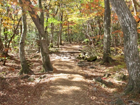 Seongpanak Trail, Hallasan Nat Park, Jeju — note the jute covered trail