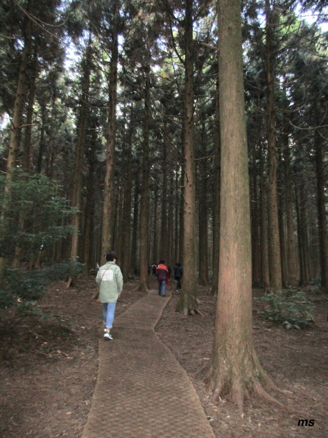 Saryeoni Forest, Jeju