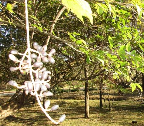 Korean provit, Halla Eco-Forest, Jeju Island