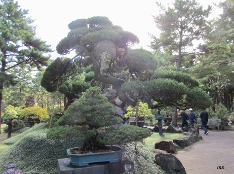 Stone & Bonsai Garden, Hallim Park
