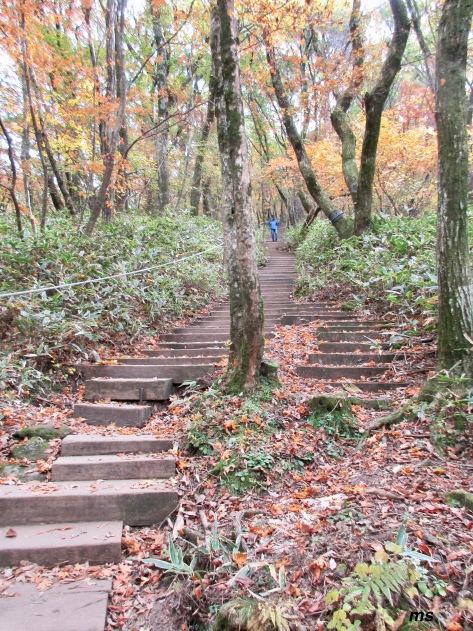 Seokgulam Trail, Hallasan National Park