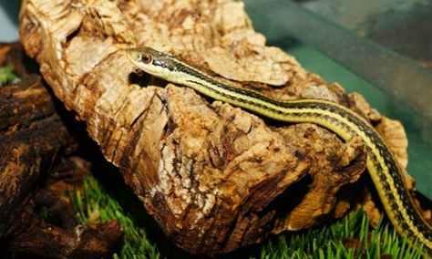 snake-young-animal-cute-slim-162347